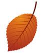 갈색낙엽 템플릿
