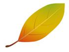 낙엽 템플릿