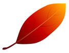 빨간낙엽 템플릿
