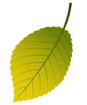 연두색낙엽 템플릿