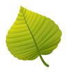 연두색단풍잎 템플릿
