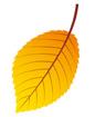 주황색낙엽 템플릿
