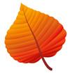 주황색단풍잎 일러스트/이미지