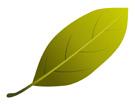 초록낙엽 템플릿