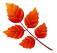 단풍잎 템플릿