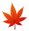 빨간단풍잎 템플릿