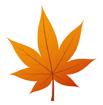 주황색단풍잎 템플릿