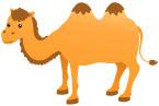 낙타 템플릿