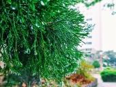 빗방울 템플릿