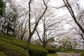 벚꽃길 템플릿