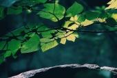 나뭇잎바위 일러스트/이미지