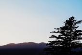 산과나무실루엣 일러스트/이미지