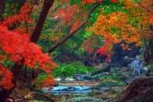 가을계곡 일러스트/이미지