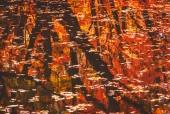 계곡에비친나뭇실루엣과나뭇잎 일러스트/이미지