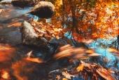 계곡물에흐르는나뭇잎 일러스트/이미지