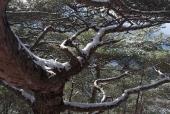 눈 덮힌 나무 템플릿