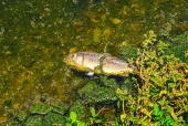 죽은 물고기 템플릿