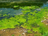 하천에 녹조현상 템플릿