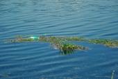 강 위에 쓰레기 템플릿