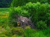 쓰러진 나무와 쓰레기 템플릿