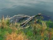 강 위에 쓰레기와 나무 템플릿