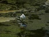 오염된 강에 새 템플릿