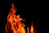 불 템플릿