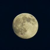 보름달 템플릿