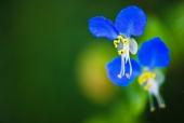 파란색의 꽃 템플릿