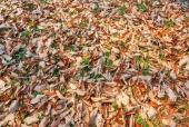 나뭇잎 일러스트/이미지