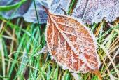 나뭇잎에언얼음 일러스트/이미지