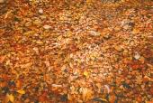 계곡단풍잎나뭇잎 일러스트/이미지