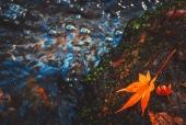 계곡물과단풍잎 일러스트/이미지