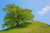 능 위에 나무 템플릿