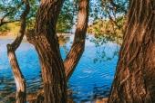 나무 템플릿