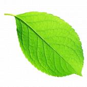 나뭇잎 템플릿