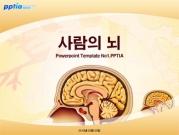 사람의 뇌 템플릿