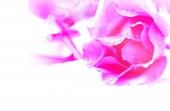 꽃과 십자가 템플릿