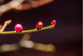 홍매화꽃새싹 템플릿