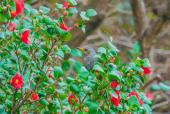동백꽃나무에직박구리새 템플릿