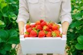 딸기 들고 있는 모습 템플릿