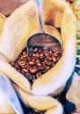 커피원두 템플릿