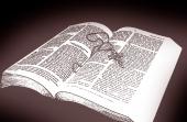 영문성경과 십자가 템플릿