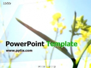 꽃과 하늘 B 템플릿