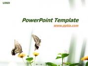 나비와 꽃 템플릿