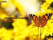 나비 템플릿