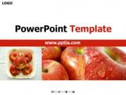 사과 A 템플릿
