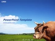 소와 시골풍경 템플릿